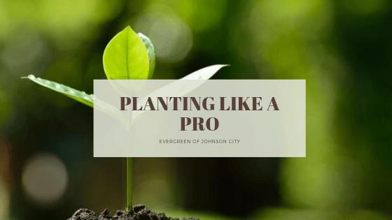 Planting Like a Pro